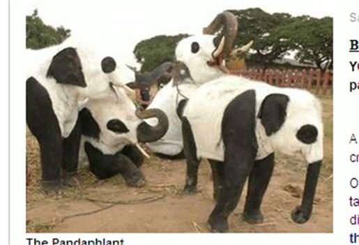 Olifanten worden verkleed in Thaise zoo