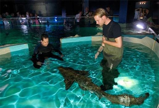 Zwemmen met haaien in Aquatopia kost 50 euro