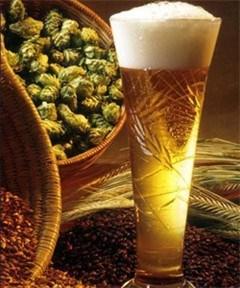 Klimaatwijziging slecht nieuws voor bierliefhebbers