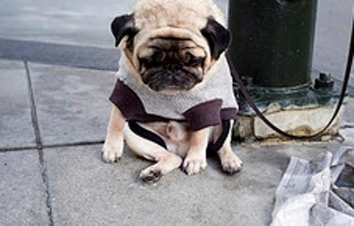 Verdrietigste hondje ter wereld hit op internet