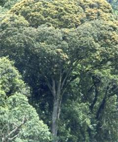 Europa haalt miljoenen bomen uit ontwikkelingslanden