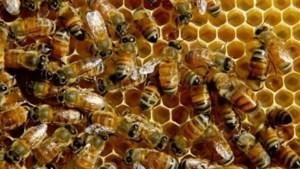 Honderdduizenden bijen gestikt in brand