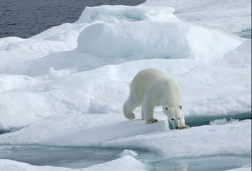 Jonge jager overleeft nacht op een ijsschots met ijsberen