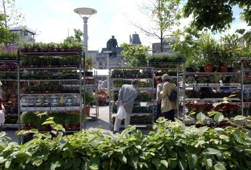 Bloemenmarkt op Groenplaats