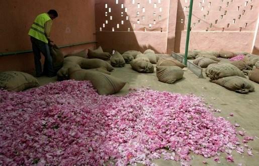 Afrikaanse fairtradeboeren gooien 20 miljoen rozen weg