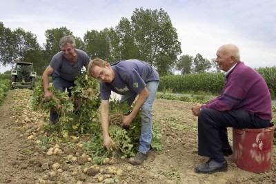 Aardappelen, groenten en fruit hebben last van de warmte