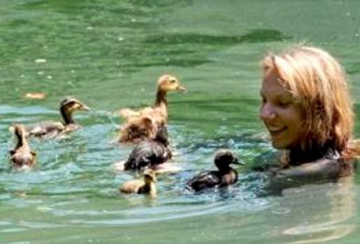 Vogelliefhebbers zwemmen met eenden naar zee