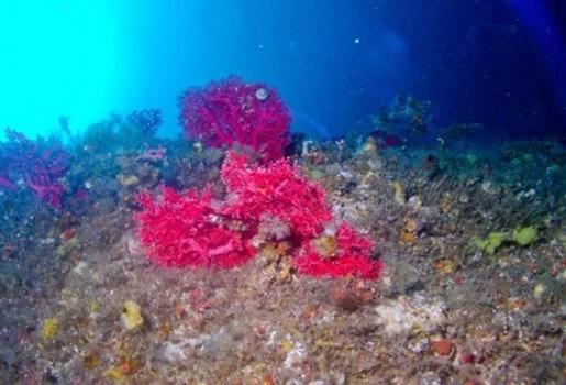 Warmte doodt koralen in Caraïben