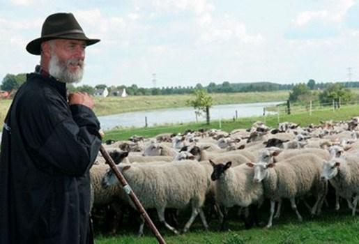 Limburgse herder komt met 600 schapen aan in Brussel