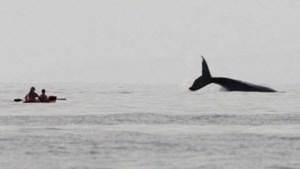 Walvissen voortaan veilig rond Palau