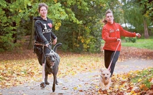 Honden en baasjes strijden voor titel zesde canicross