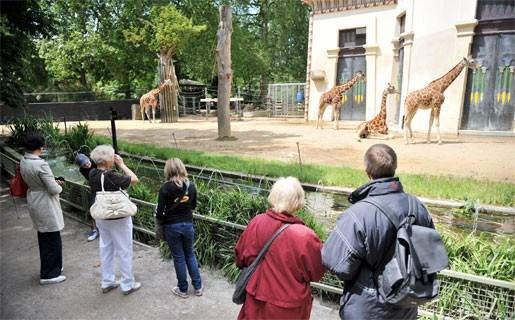 Antwerpse Zoo brengt verhalen via mobiele dragers