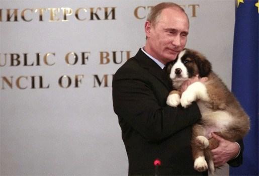 Russen bedenken naam voor nieuw hondje Poetin