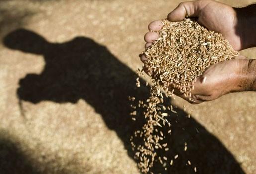 """Rapport luidt alambel: """"Voedselprijzen stijgen met 10 tot 20%"""""""