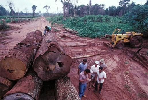 Indonesië wil zowat heel z'n regenwoud wegkappen