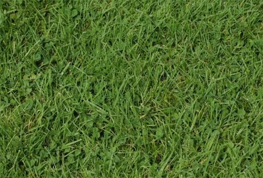 Geldboete voor man die al jodelend gras maait