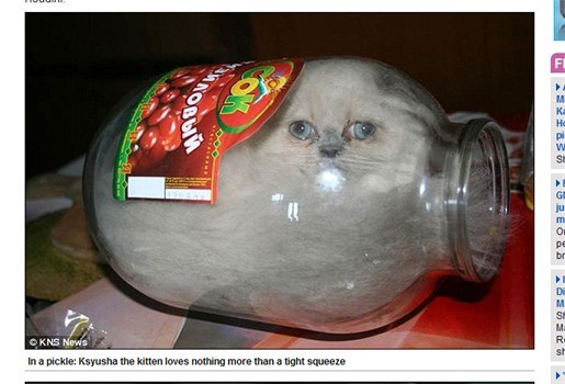 Kat speelt verstoppertje in glazen fles