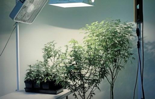 Cannabis Social Club moet vervolgd worden