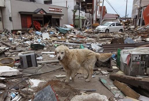 Japan maakt tientallen miljarden vrij voor wederopbouw
