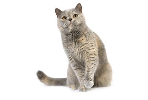 Kat voorkomt dodelijk drama door te krijsen