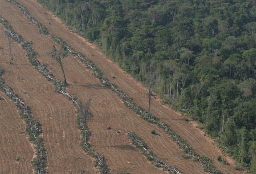 Onrustwekkende stijging van ontbossing Amazonewoud