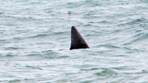 Haai doodt Brit op huwelijksreis