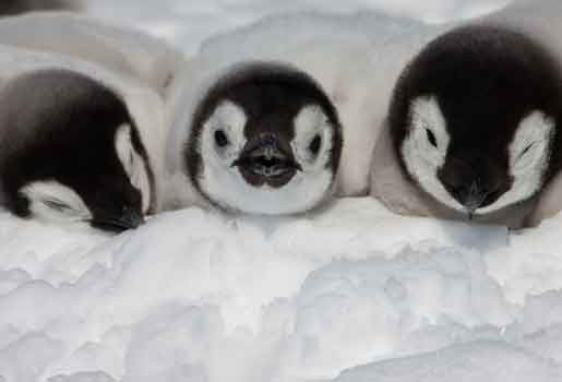 Antarctische ijskap blijft smelten