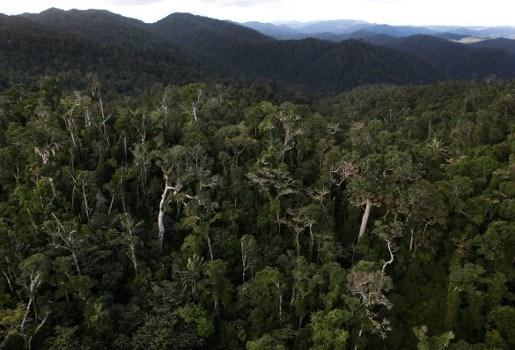 Verdamping uit bomen gaat opwarming aarde tegen