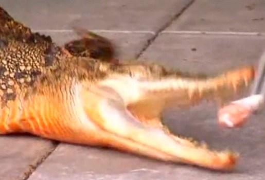 """""""Ik zou mijn oranje krokodil op eBay moeten zetten"""""""