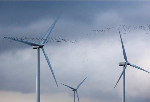 Machiels plant 47 windmolens in Genk