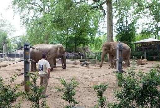 """Belgische dierentuinen: """"rapport stemt niet overeen met realiteit"""""""