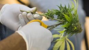 Politie rolt drie cannabisplantages op