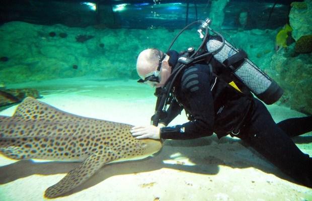 Belg die met haaien zwom op Discovery Channel