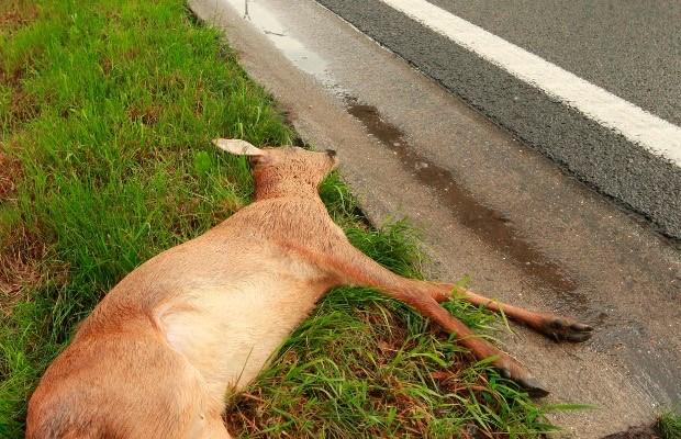 Jagers gaan 36 reeën doodschieten