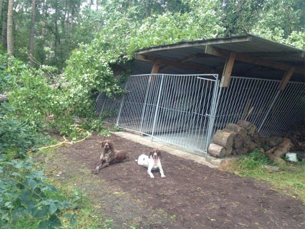 Twee omgevallen bomen verwoesten hondenhok