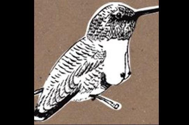 Tettenvogel gaat strijd met verzuring aan