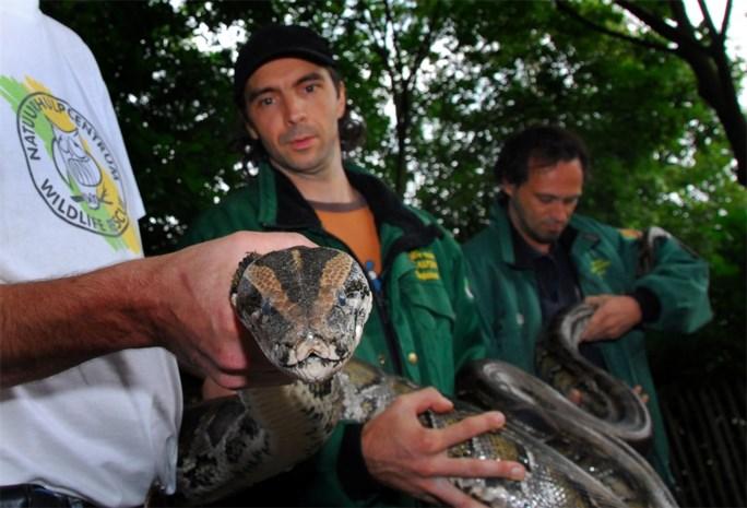 Florida opent de jacht op de tijgerpythons
