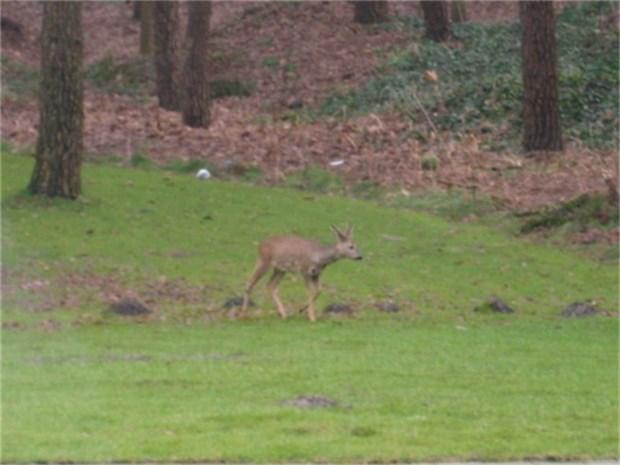 Jagers willen aanrijdingen met reeën voorkomen