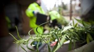 Dubbel zoveel cannabis in beslag genomen als vijf jaar terug