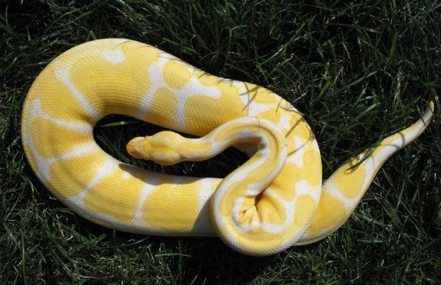 Bewoner treft slang aan in voortuin