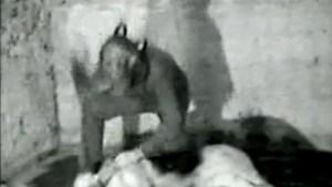 Heisa rond kunstvideo waarin dode hond in stukken wordt gehakt (video)