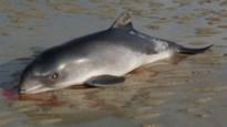 Dode bruinvis aangespoeld in De Panne