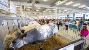 Litouwen toont interesse voor Belgisch witblauw ras op beurs Libramont