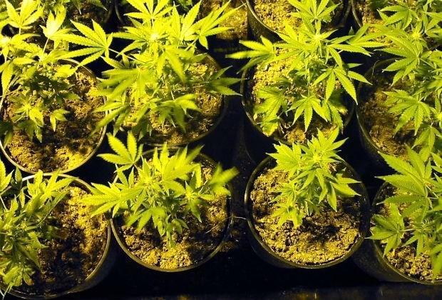 Ex-voetballer krijgt werkstraf voor cannabisplantage