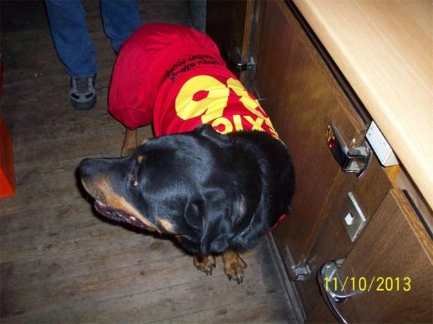 Ook Zandhovense hond supportert mee voor Rode Duivels