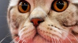 Vrouw rijdt 2.000 km op een dag om kat terug te halen
