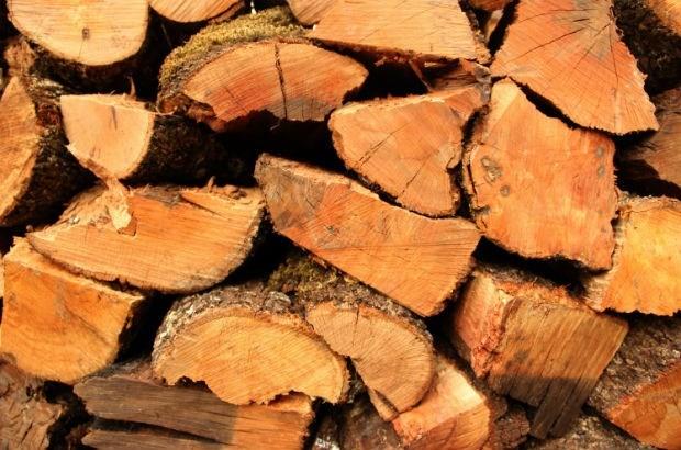 Illegaal hout dat via Antwerpen reisde, in Duitsland in beslag genomen