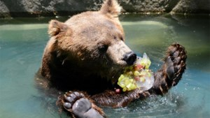 Dieren in zoo Rio de Janeiro krijgen ijslolly's tegen hitte