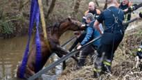 Brandweer haalt paard uit diepe greppel (album)