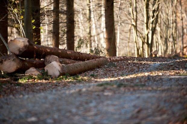 Agentschap Bos en Natuur waarschuwt voor stormgevaar in bossen